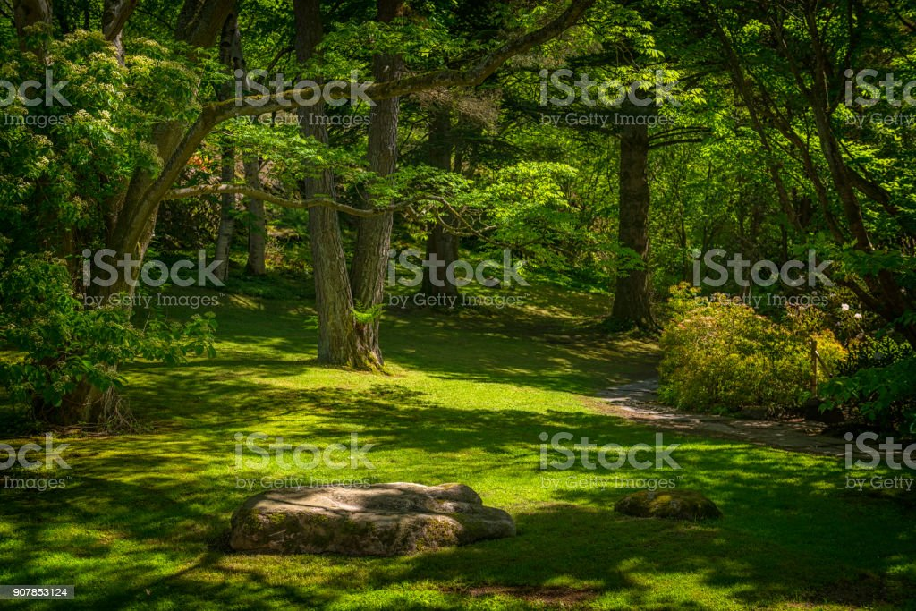 Glade in green park stock photo