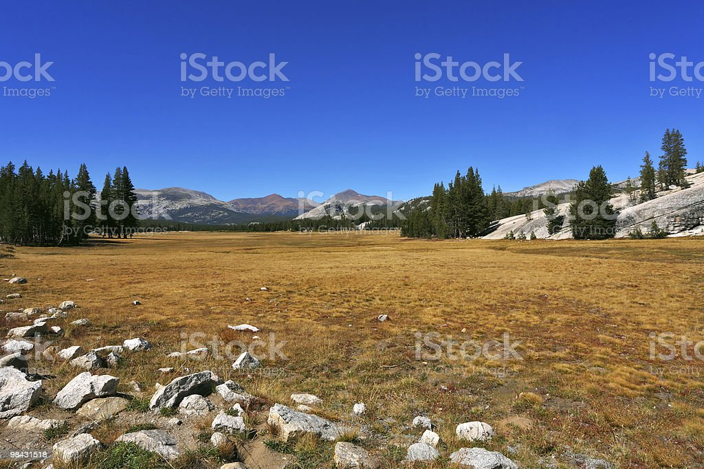glade in national park on midday royalty-free stock photo