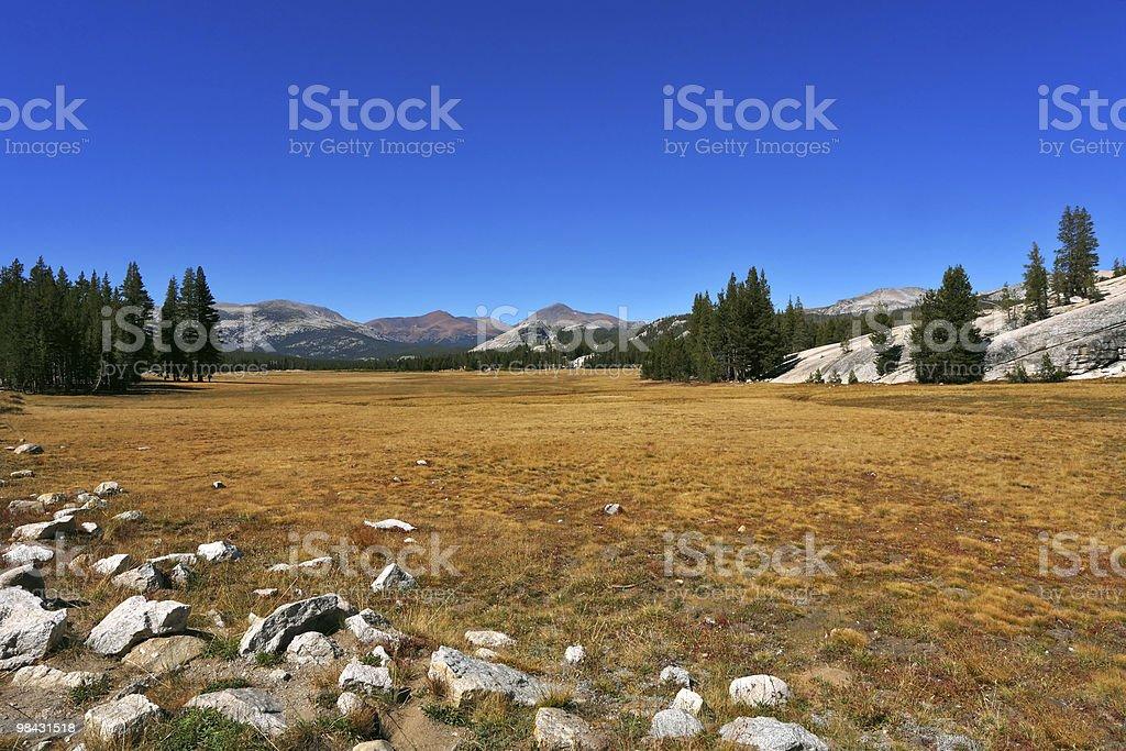 Radura nel Parco Nazionale di mezzogiorno foto stock royalty-free