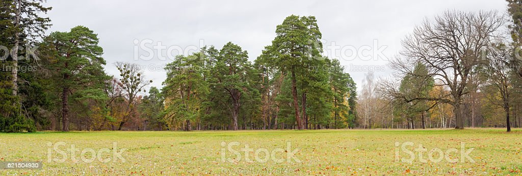 Glade in park on background of conifers and deciduous trees photo libre de droits