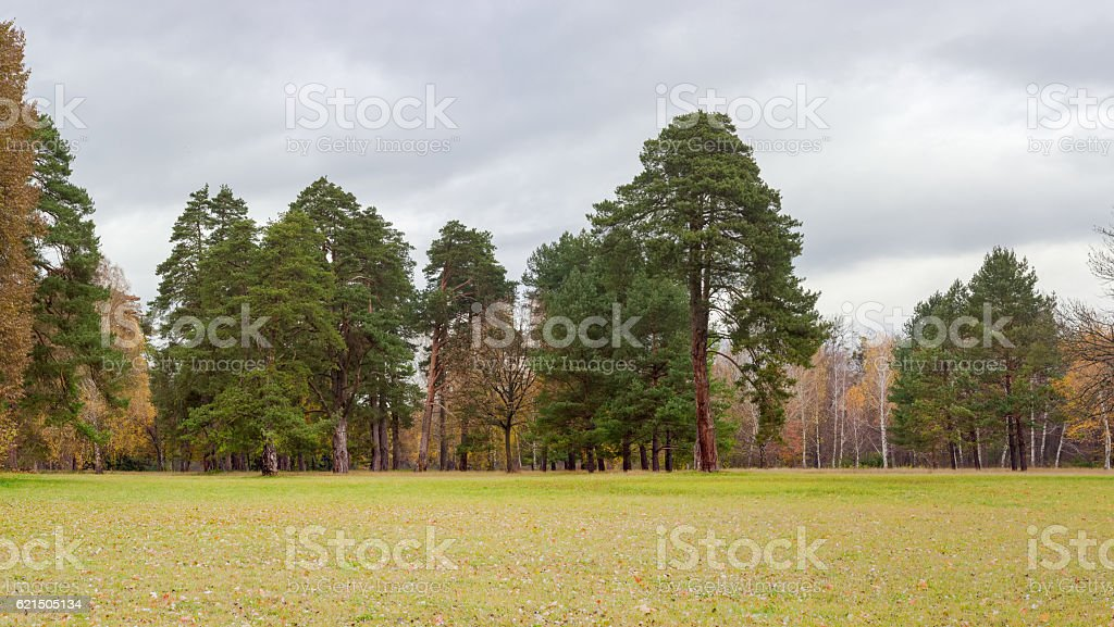 Glade in park on background of trees and cloudy sky foto stock royalty-free