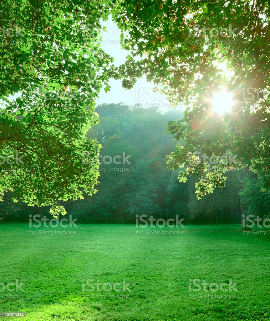 Glade stock photo