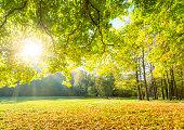 Glade in park in autumn.