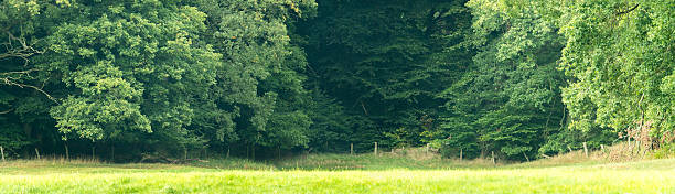 Glade with old oaks and lush grass in Mecklenburg-Vorpommern. stock photo
