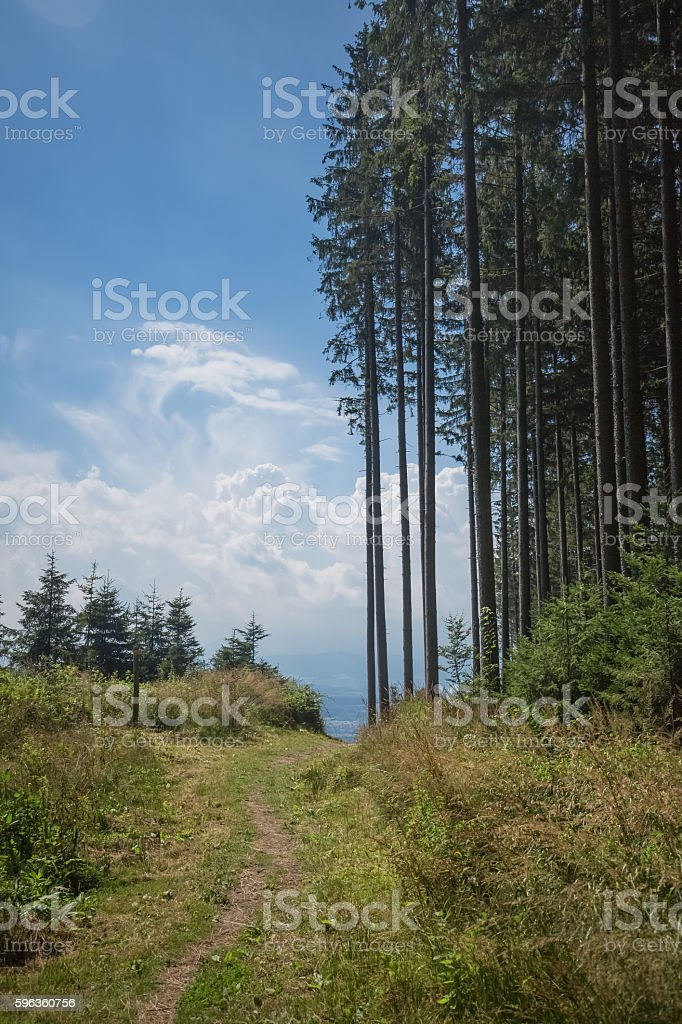Glade with path royalty-free stock photo