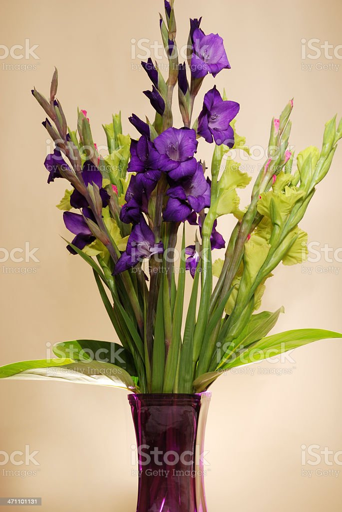 Gladiolas royalty-free stock photo