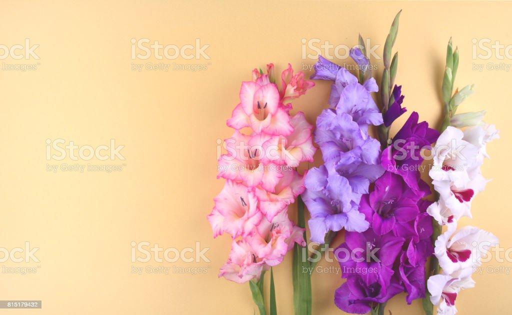 Gladiolus flowers on yellow background. stock photo