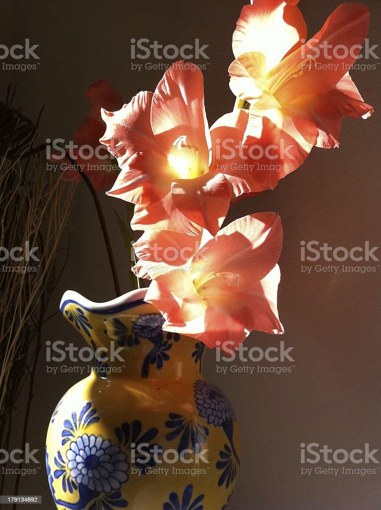 Gladiolus in a vase stock photo