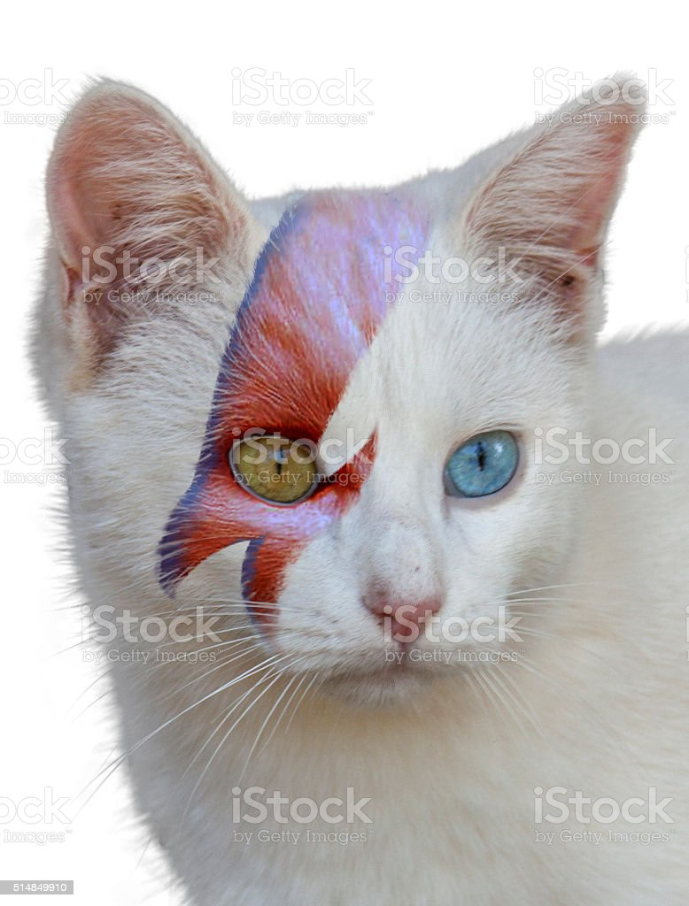 glam cat stock photo