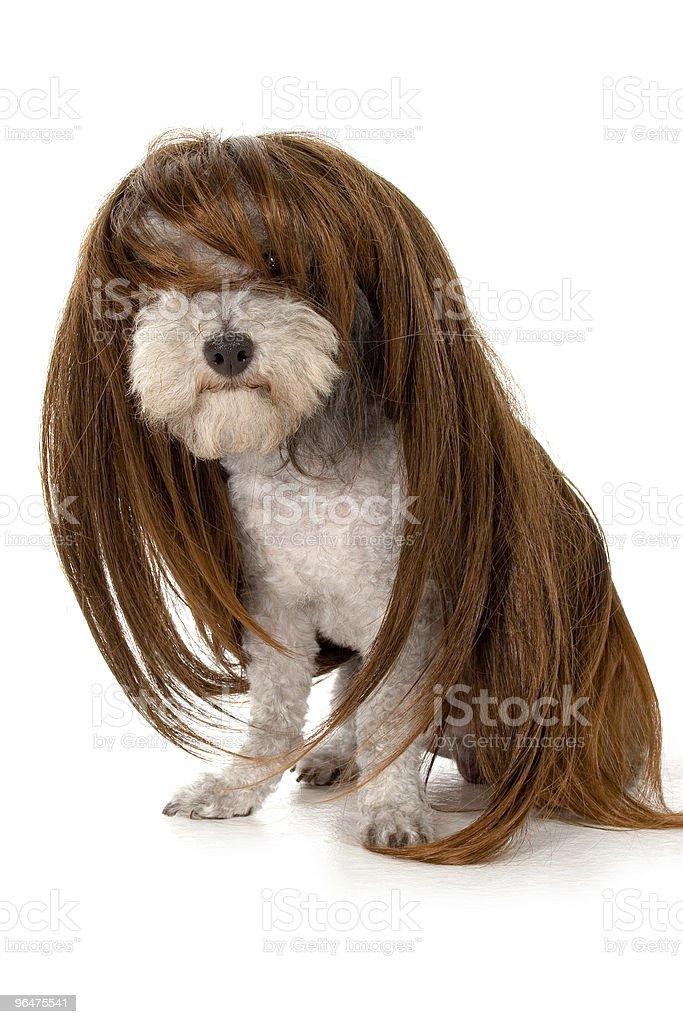 Glamour Dog royalty-free stock photo