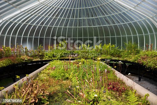Glasgow, Scotland/UK - June 30, 2019: Glasgow Botanic Gardens, a botanical garden located in the West End, features several glasshouses, the most notable of which is the Kibble Palace.