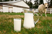 Low angle view of a pitcher and a glass full of fresh milk sitting in the pasture with a large cow in the background; copy space