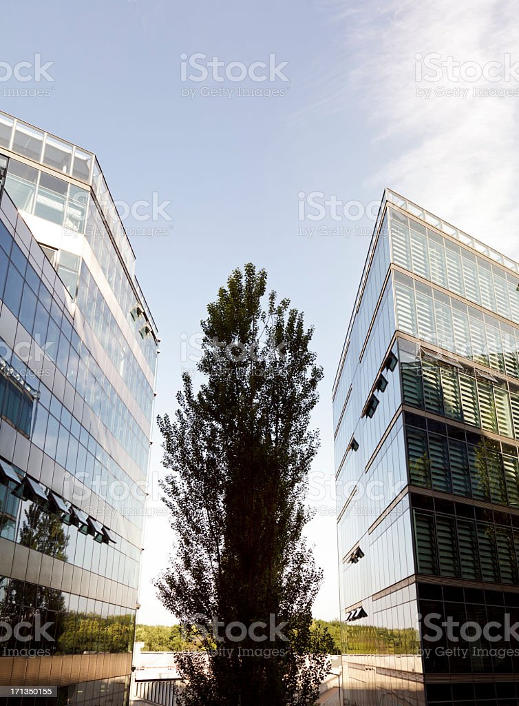 glass and steel office building with trees in sunlight royalty-free stock photo