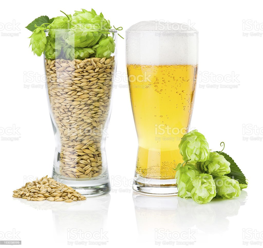 Glass beer, cup full of barley and hops isolated stock photo