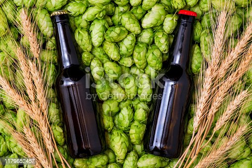 istock A glass bottles of beer, green cones of hops and wheat grain top view 1179652457