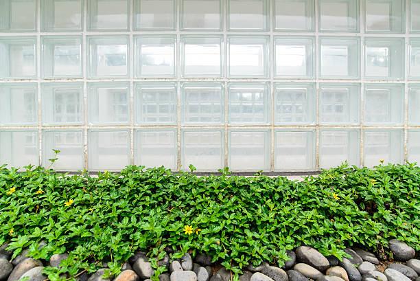 Glass box wall and green plant stok fotoğrafı