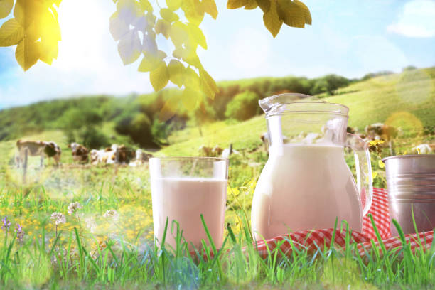 Glass containers filled with milk on tablecloth in the grass stock photo