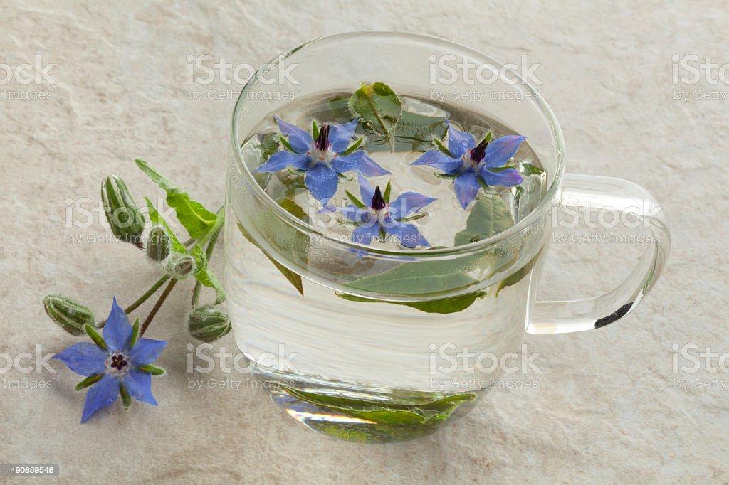 Vetro tazza di tè con Borragine - foto stock