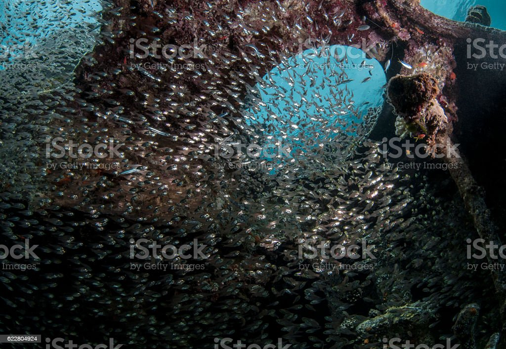 Glass Fishes in Aqaba stock photo