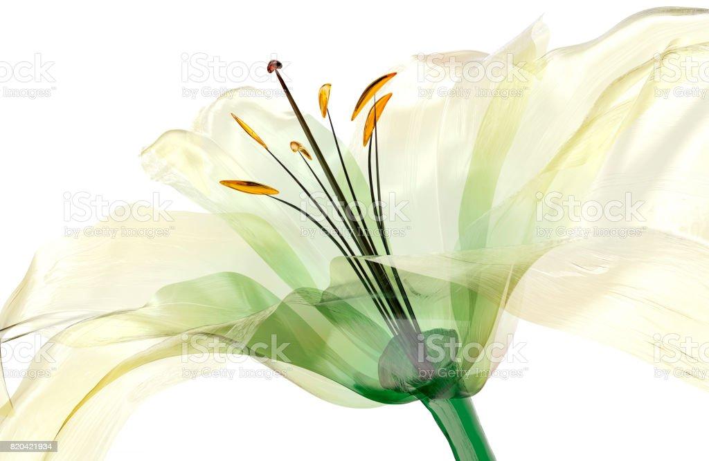 Glas-Blume isoliert, die Lilie Blume – Foto