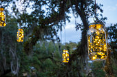 Glass Jars with Christmas Lights Hanging from Oak Trees have been decorated with white lights for the Holiday season.