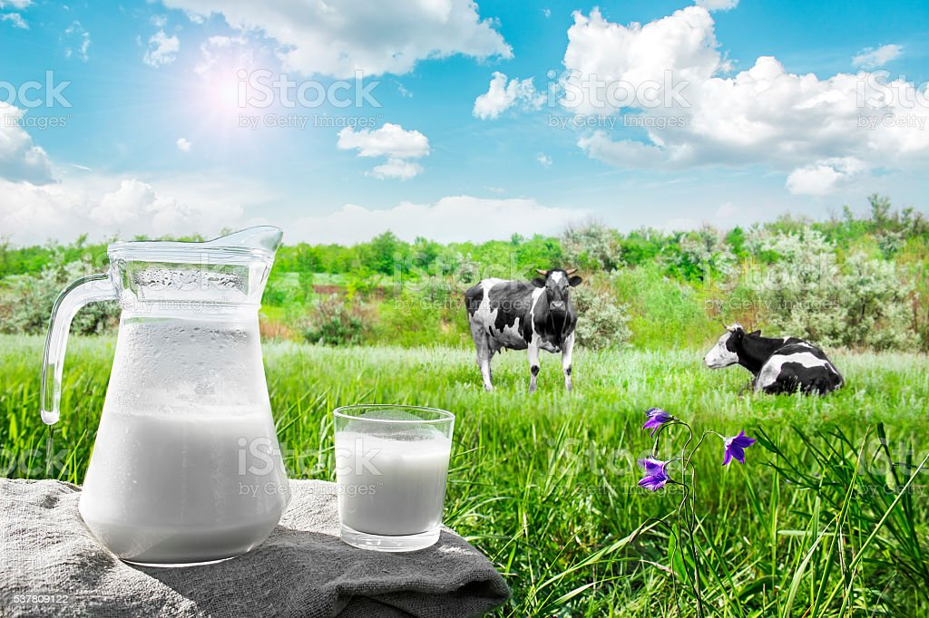 Glass jug with milk, glass and herd of cows stock photo