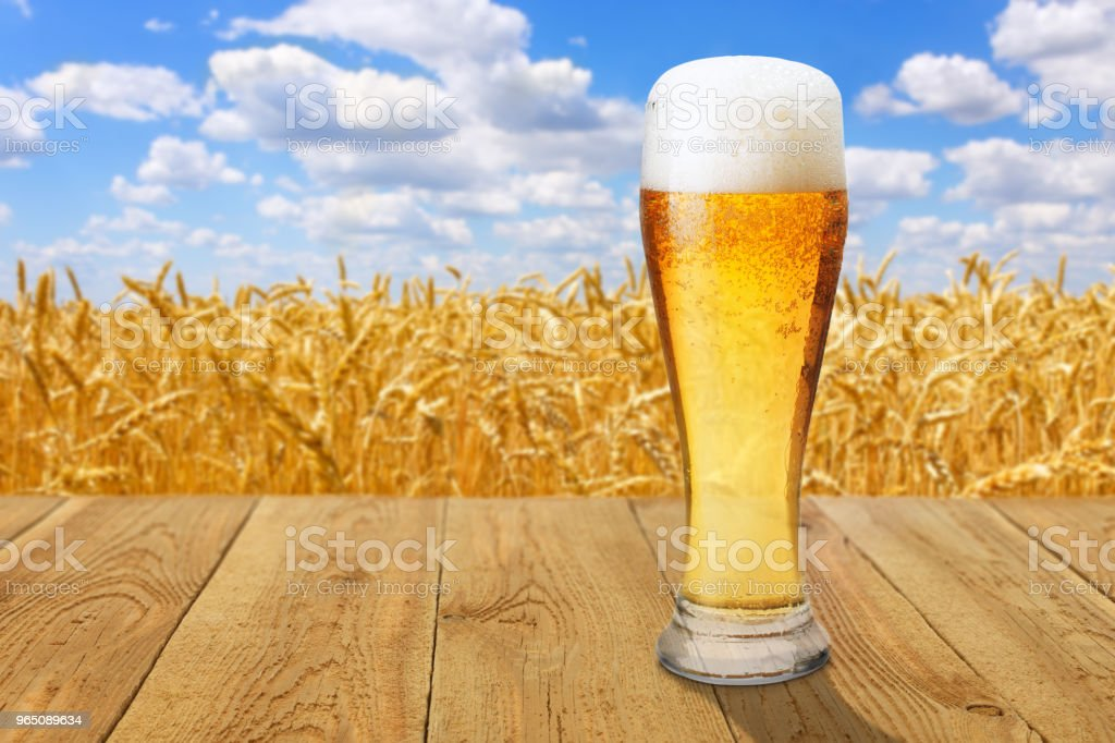 glass of beer against wheat field zbiór zdjęć royalty-free