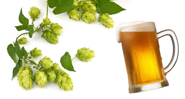 Glass of beer and hop cones isolated stock photo