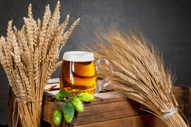 glass of beer and raw material for beer production stock photo