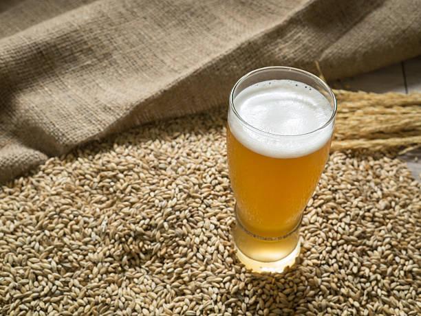 Glass of beer on malt grains stock photo