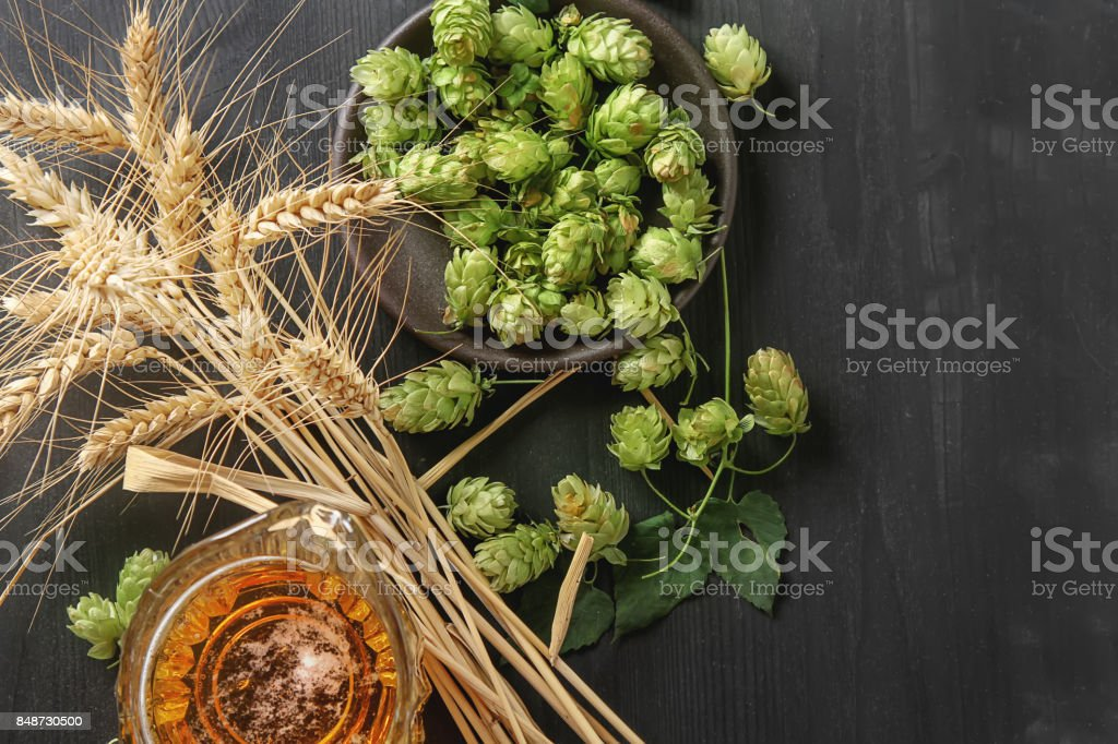 A glass of beer, production ingredients. Fresh-picked whole hops and wheat close-up. Dark wood background. Top view stock photo