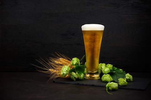 istock Glass of beer with green hops and wheat ears on dark wooden table. Still life 1037004148