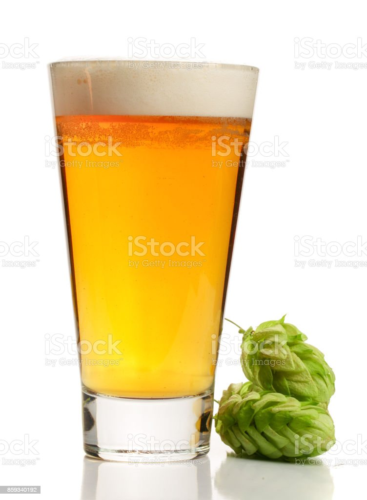glass of beer with hop cones isolated on white background stock photo
