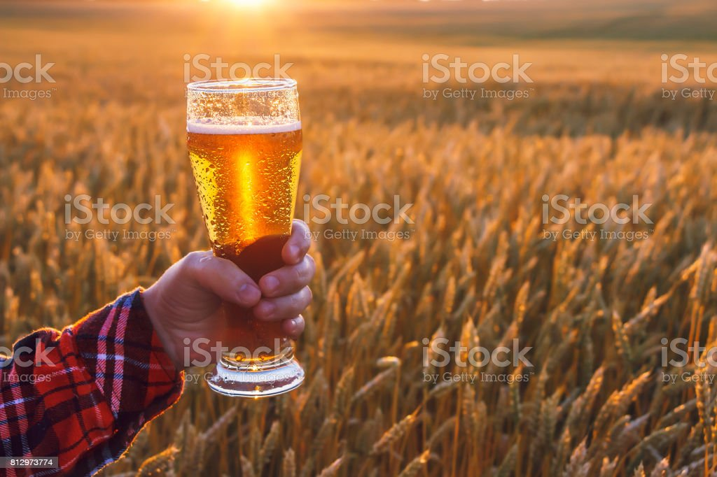 Misted mug of cold beer and picturesque landscape with golden rye...