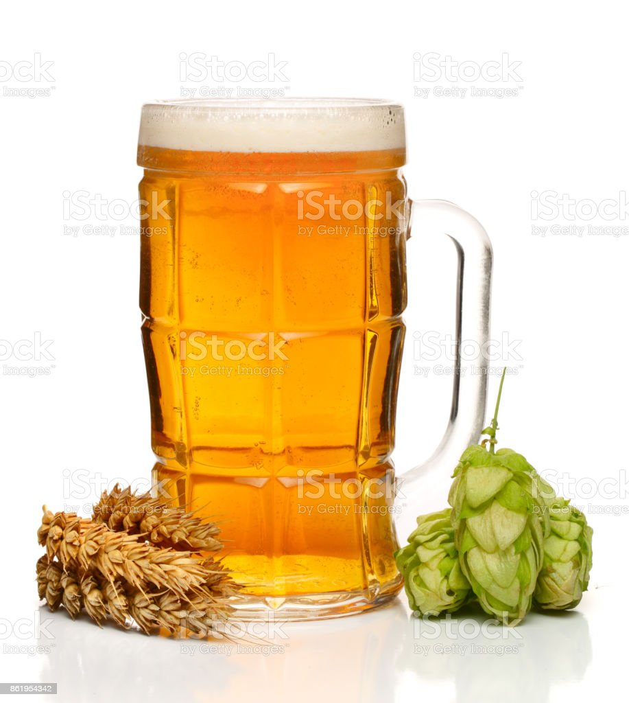 glass of foamy beer with hop cones and wheat isolated on white background stock photo