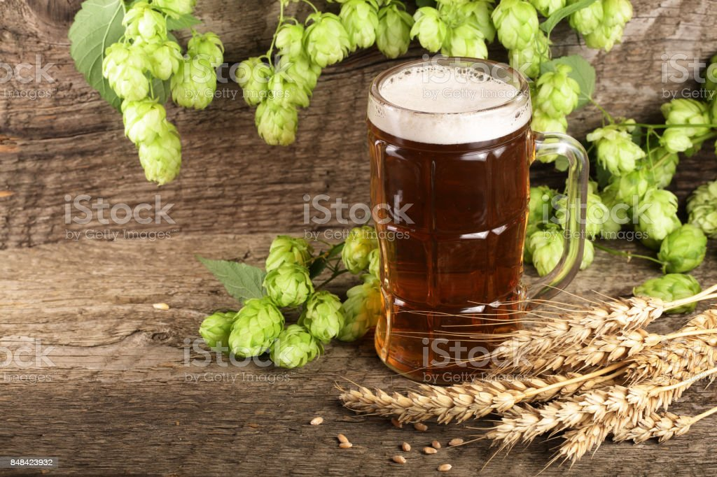 glass of foamy beer with hop cones and wheat on old wooden background stock photo