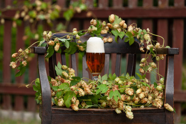 Um vidro da cerveja fresca e de uma planta do lúpulo. Conceito para o Festival da cerveja, Fest de Oktober. Fundo natural, outdppr - foto de acervo