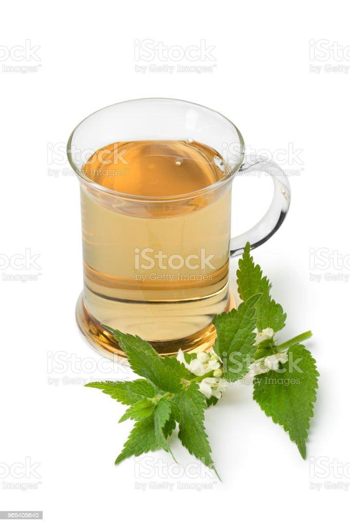 Glass of healthy white dead nettle tea royalty-free stock photo