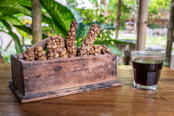 Glass of Kopi Luwak coffee next to a wooden box with some coffee cherries defecated by palm civets in a coffee farm of Ijen Plateau, Java, Indonesia stock photo