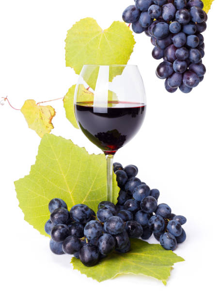 Glass of red wine with blue grape clusters stock photo