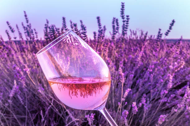 Glass of rose wine in lavender field stock photo