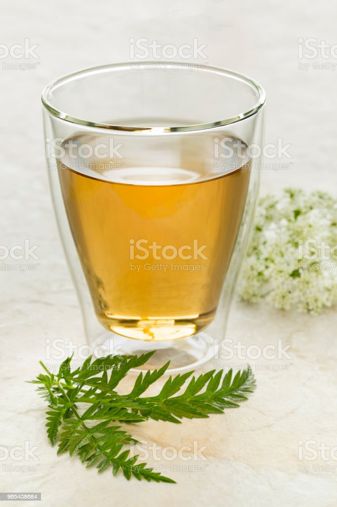 Glass of tea with a twig of fresh cow parsley royalty-free stock photo