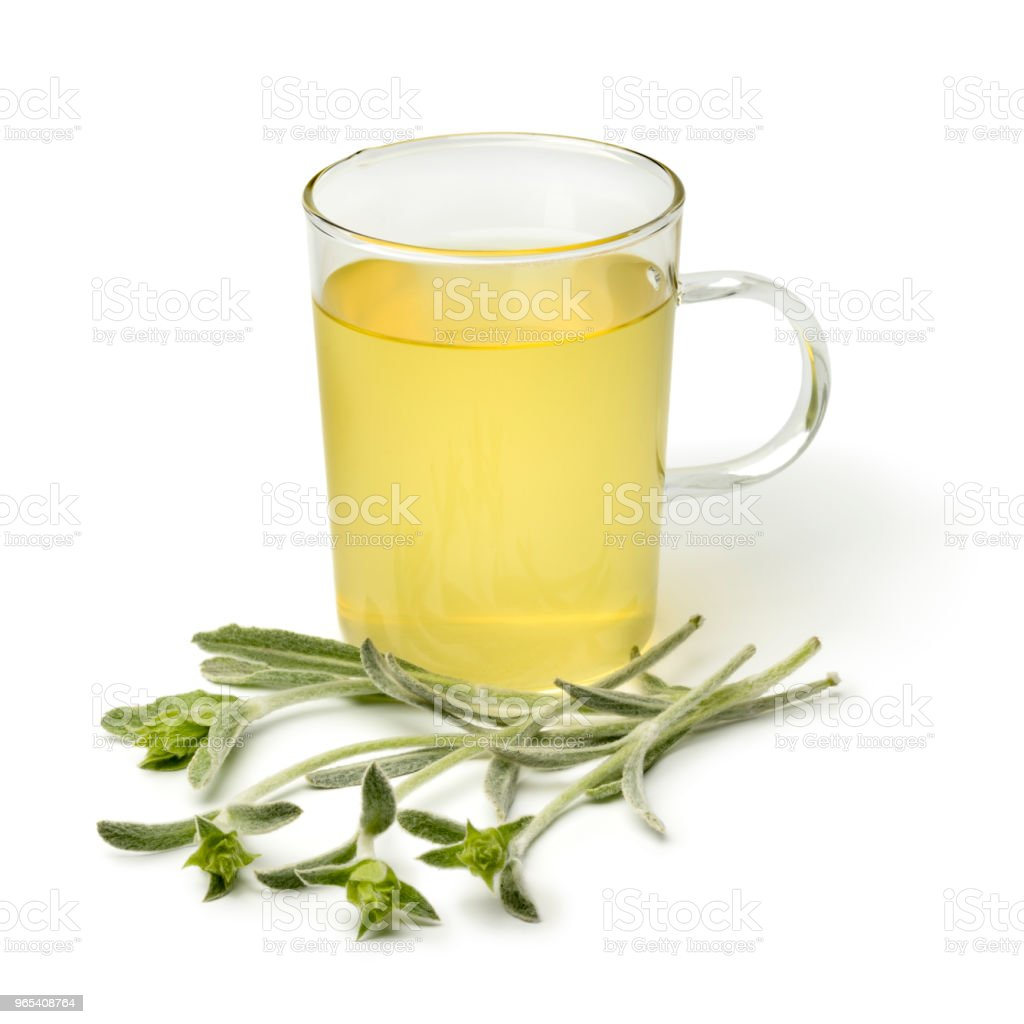 Glass of tea with a twig of fresh green ironwort royalty-free stock photo