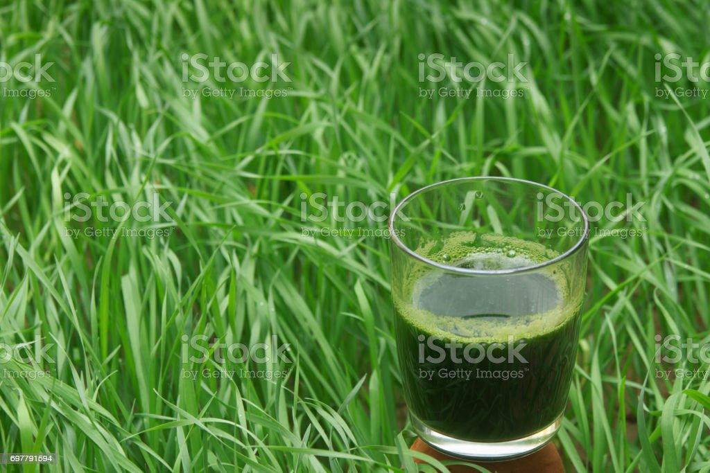 Glass of wheatgrass juice on a wheat field. stock photo