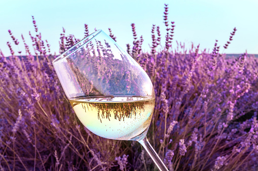 Glass of white wine in lavender field