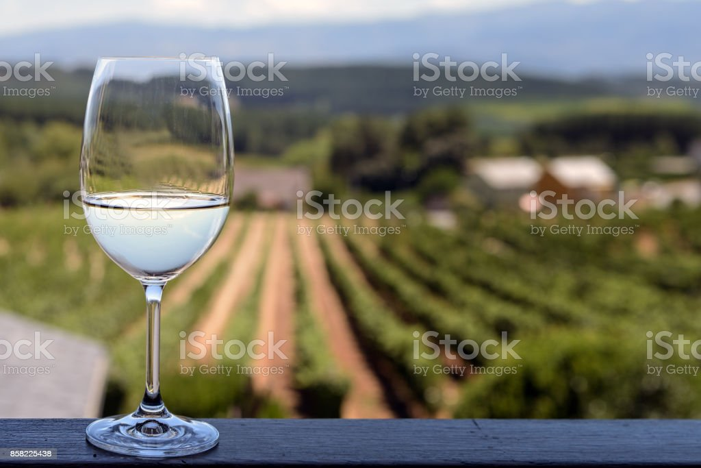 Glass of white wine with vineyards background; focus on glass stock photo