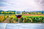 Glass of wine and vineyards