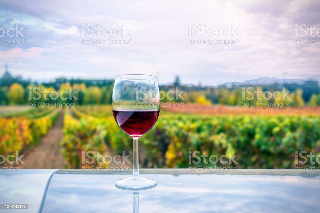 Glas Wein und Weinberge – Foto