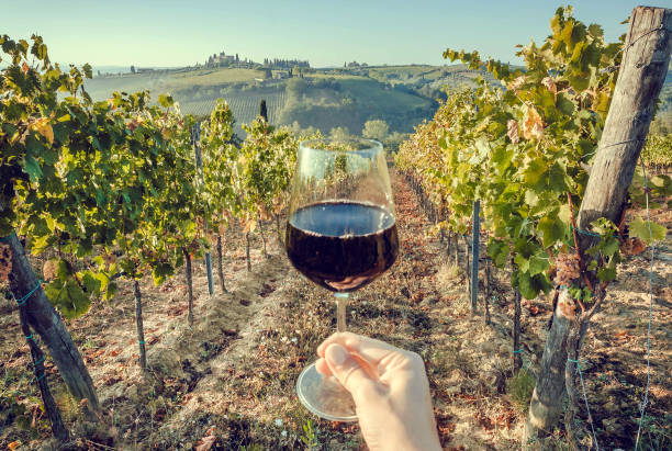 glass of wine in hand of tourist in a natural landscape of tuscany, with green valley of grapes. wine beverage tasting in italy during harvest - argentina stock pictures, royalty-free photos & images