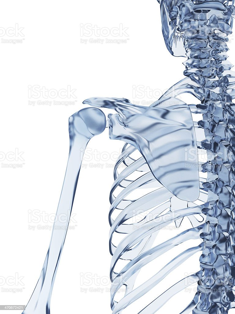 Glass Skeleton Shoulder Stock Photo More Pictures Of Anatomy Istock